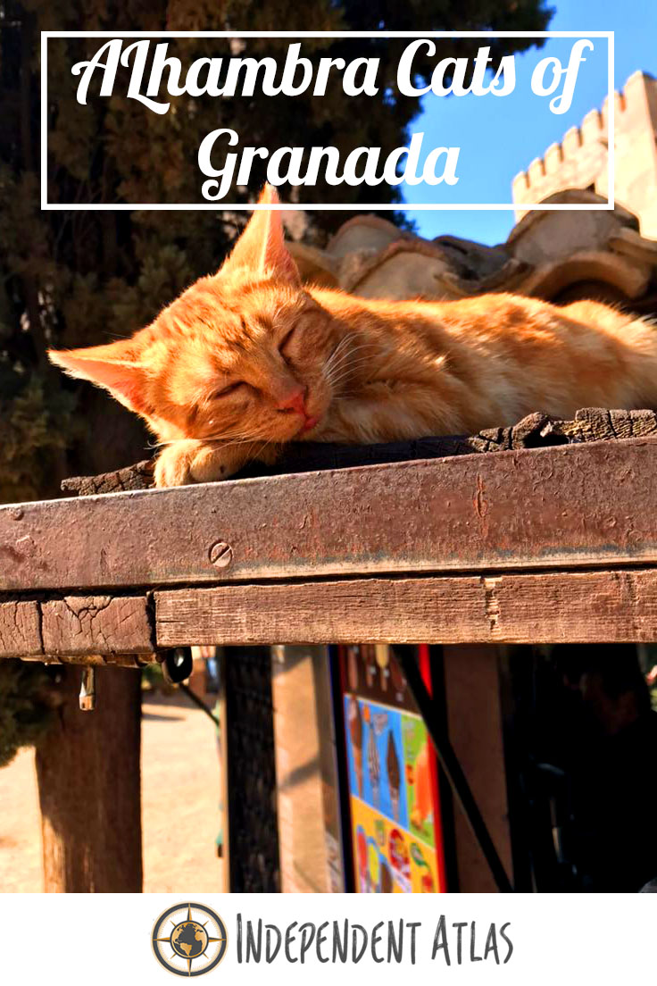 Alhambra Cats pin for pinterest